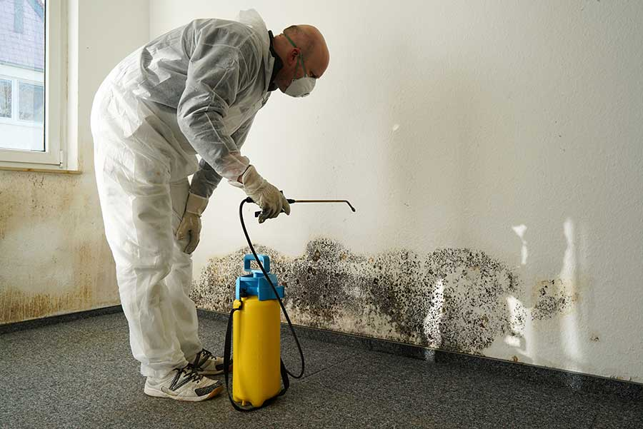 Get Professional Mold Inspection Available For You