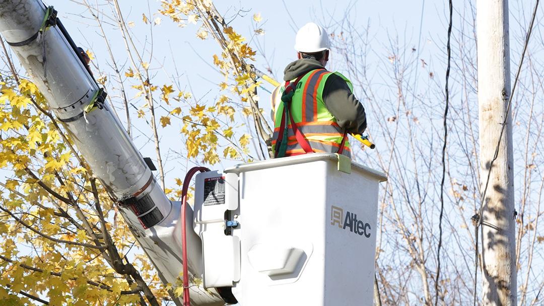 Portland tree service