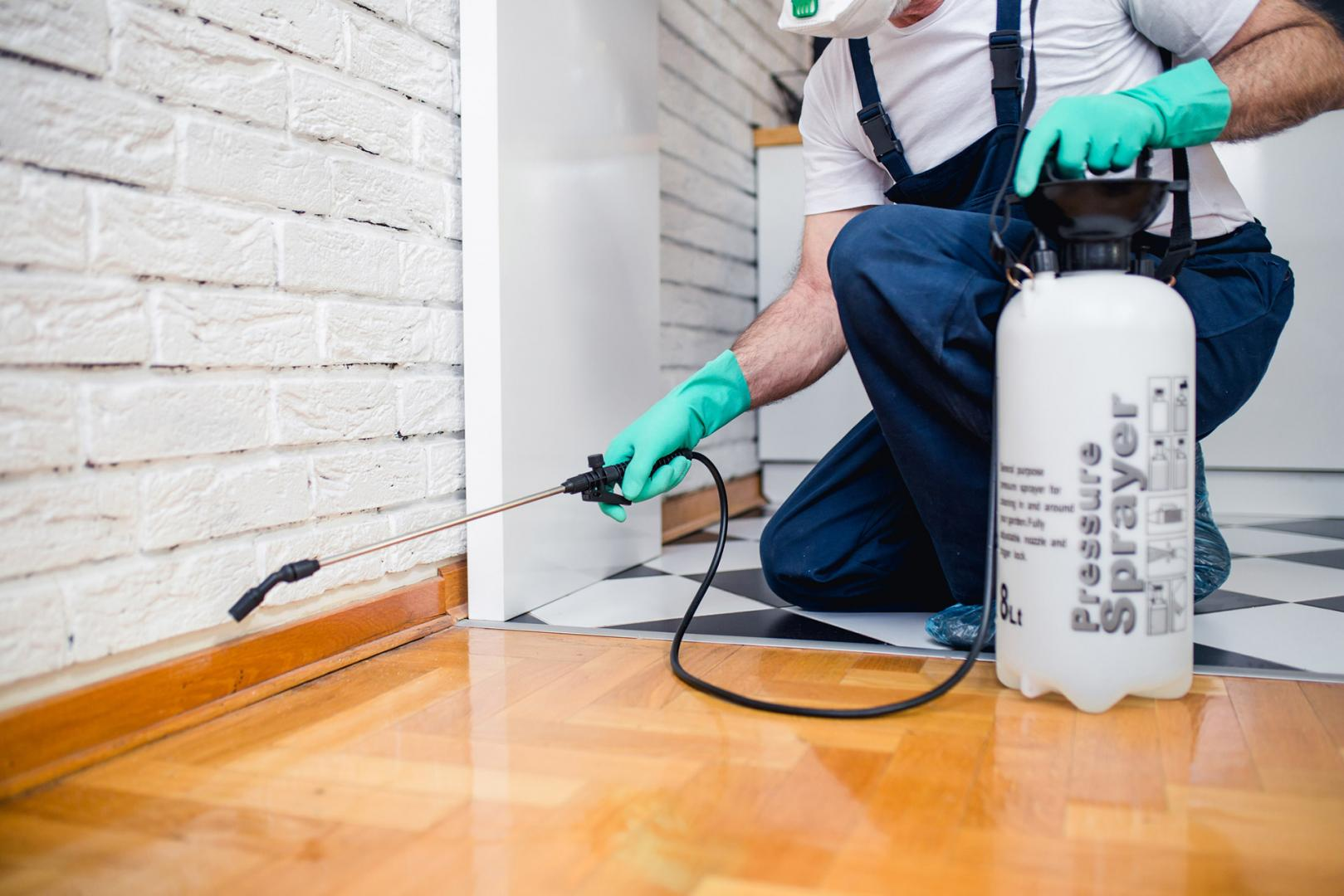 Pest Inspections Protect Your Home