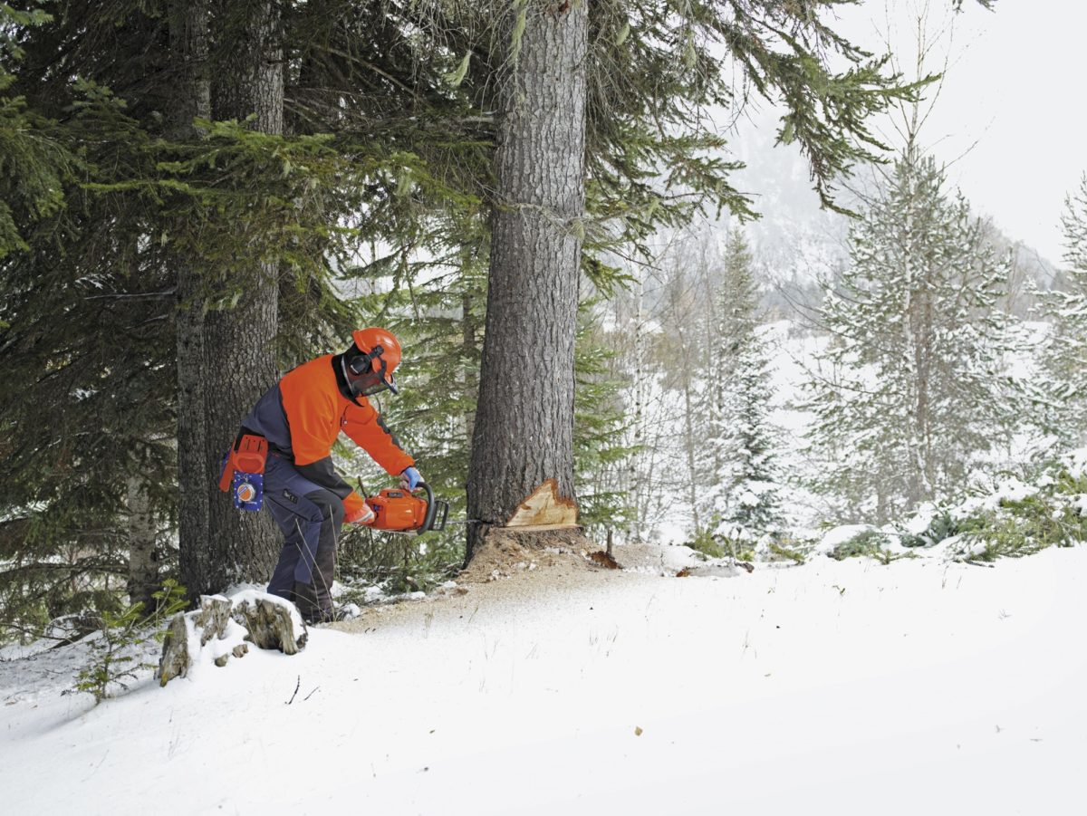 chainsaw in the winter